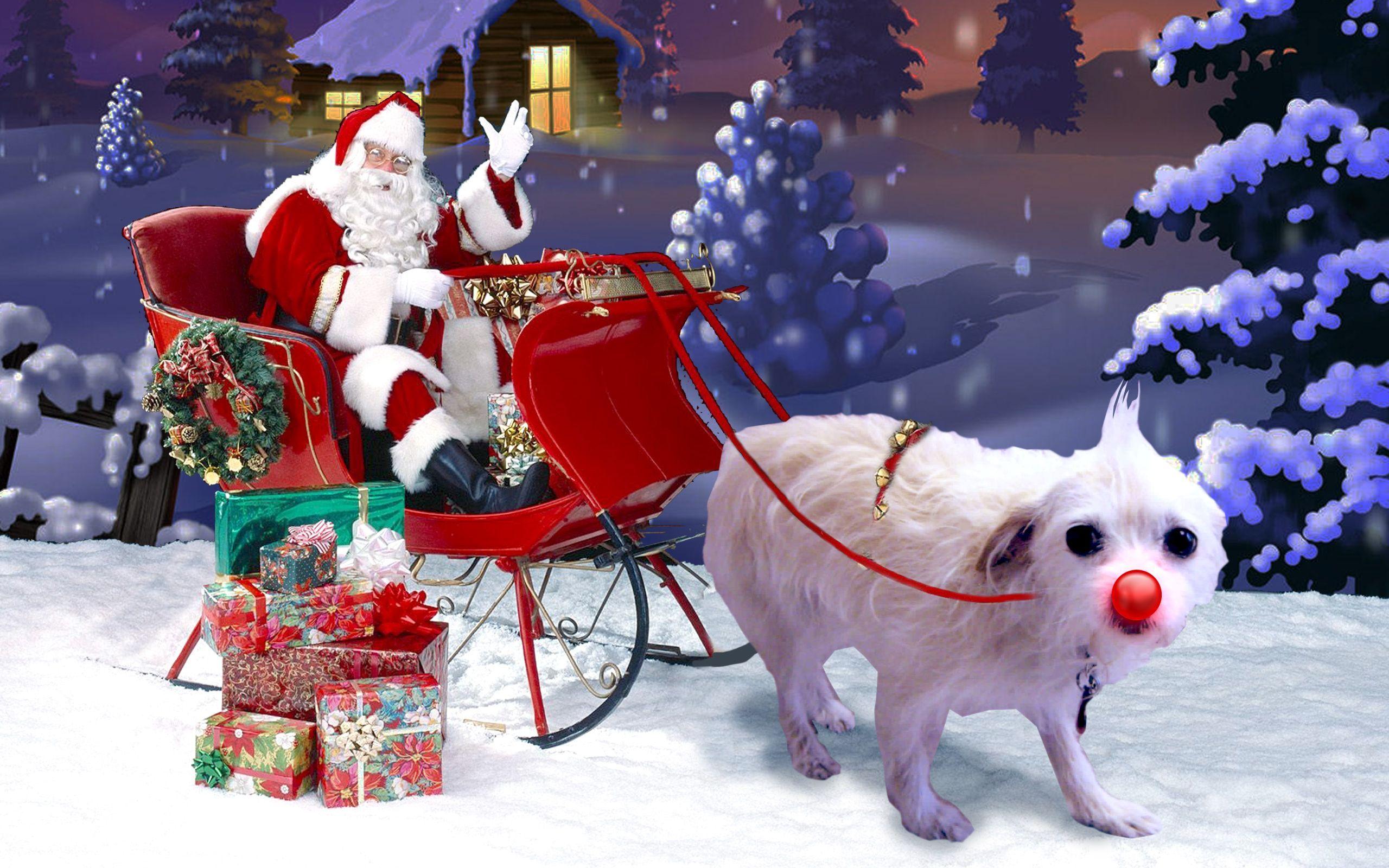 suzie-sleigh